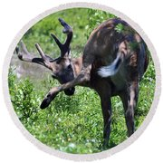 Deer Itch 2 Round Beach Towel