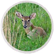 Deer Laying In Grass Round Beach Towel