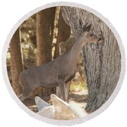 Deer On The Look Out Round Beach Towel