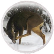Deer With An Itch Round Beach Towel