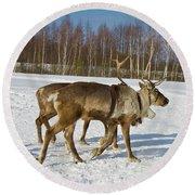 Deers Running On Snow Round Beach Towel