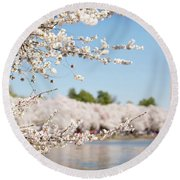 Delicate Blossoms Over The Tidal Basin Round Beach Towel
