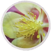 Delicate Columbine Nature Photograph Round Beach Towel