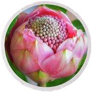 Delicate Pink Bud Waratah Flower Round Beach Towel