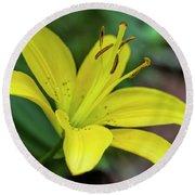 Delicate Yellow Oriental Lily Round Beach Towel