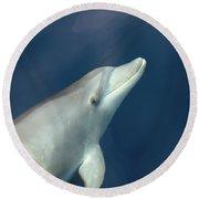 Delphin 3 Round Beach Towel