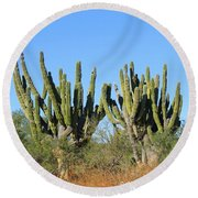 Desert Cacti In Cabo Pulmo Mexico Round Beach Towel