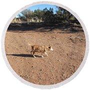 Desert Dog Round Beach Towel
