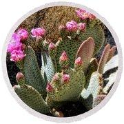 Desert Plants - Fuchsia Cactus Flowers Round Beach Towel