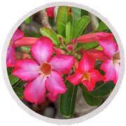 Desert Rose Or Chuanchom Dthb2108 Round Beach Towel