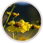 Desert Sunflower Round Beach Towel