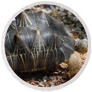 Desert Turtle With An Unusual Shell In The Wild Round Beach Towel
