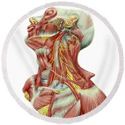 Detailed Dissection View Of Human Neck Round Beach Towel