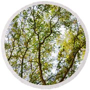 Detailed Tree Branches 5 Round Beach Towel