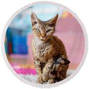 Devon Rex Purebred Domestic Cat Round Beach Towel