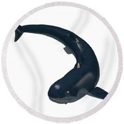 Devonian Cladoselache Shark Round Beach Towel