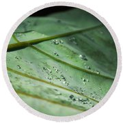 Dew Droplets Of Nature Round Beach Towel