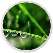 Dew Drops On Blade Of Grass Round Beach Towel