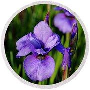 Dew Kissed Iris Round Beach Towel