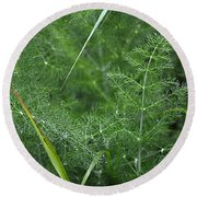 Dew On The Ferns Round Beach Towel
