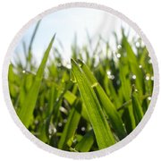 Dewdrops On New Wheat Round Beach Towel