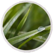 Dewy Drop On The Grass Round Beach Towel