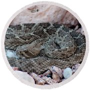 Diamondback Rattlesnake 062414a Round Beach Towel
