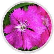 Dianthus First Love Flower Print Round Beach Towel