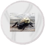 Different Take Of A Bee Round Beach Towel