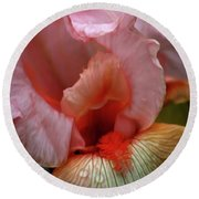 Digital Oil Painting Pink Iris 9915 O_2 Round Beach Towel