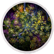 Dill Going To Seed Round Beach Towel
