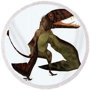 Dimorphodon Pterosaur Round Beach Towel