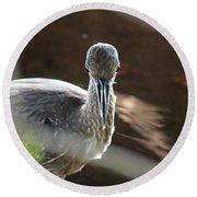 Ding Darling - Juvenile Black-crowned Night Heron Looking At You Round Beach Towel