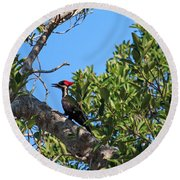 Ding Darling - Pileated Woodpecker Resting Round Beach Towel
