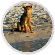 Dingo On The Beach Round Beach Towel