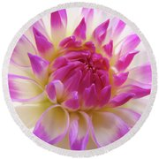 Dinner Plate Dahlia Flower Art Prints Canvas Floral Baslee Troutman Round Beach Towel