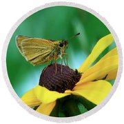 Dion On A Brown Eyed Susan Round Beach Towel
