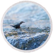 Dipper Searching For Food Round Beach Towel