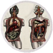 Dissected Torsos And Brains Round Beach Towel