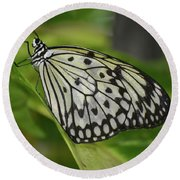 Distinctive Side Profile Of A White Tree Nymph Butterfly Round Beach Towel