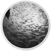 Diver And A Large School Of Bigeye Round Beach Towel
