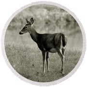 Doe By The Waters Edge Round Beach Towel