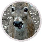 Doe Eyed Deer Talk Round Beach Towel