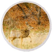 Doe High Stepping On Bald Mountain Round Beach Towel