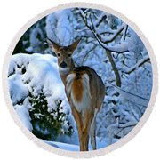 Doe In The Snow In Spokane 2 Round Beach Towel