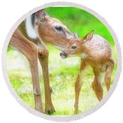 Doe Nuzzles Her Fawn Round Beach Towel