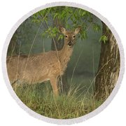 Doe On A Foggy Morning In Wyoming Round Beach Towel