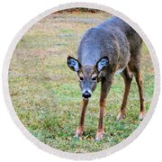 Doe Stomp Round Beach Towel
