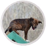 Dog 388 Round Beach Towel