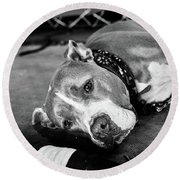 Dog At The Ring Round Beach Towel